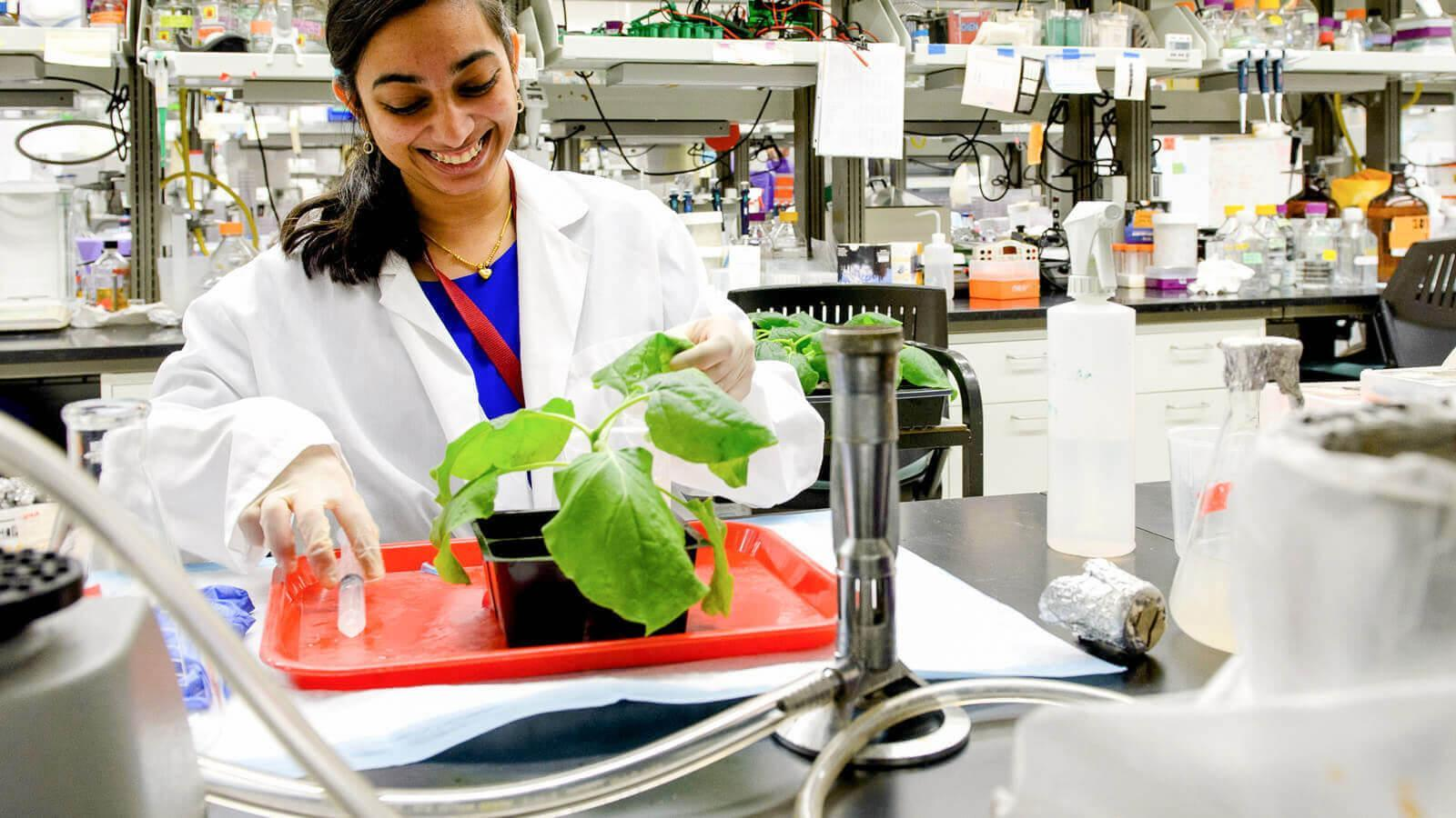 Woman in a lab coat studying a green plant
